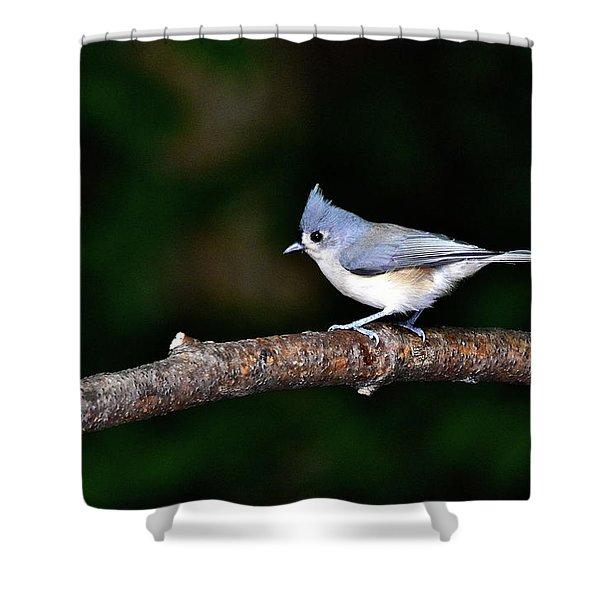 Back Yard Bird Shower Curtain