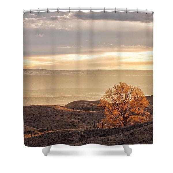 Backlit Cottonwood Shower Curtain