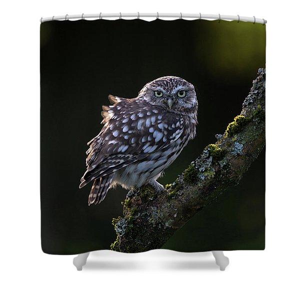 Backlit Little Owl Shower Curtain
