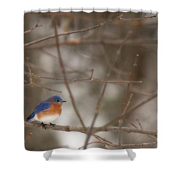 Backyard Blue Shower Curtain