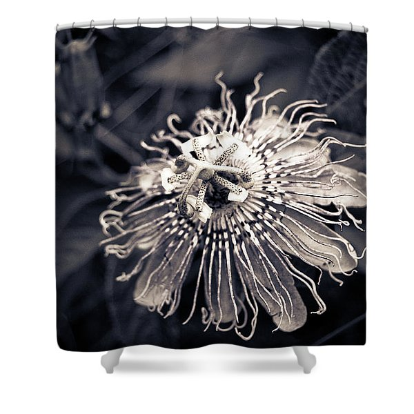 Clematis Flower Bloom Shower Curtain