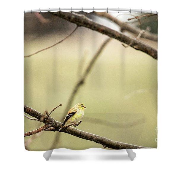 Backyard Yellow Shower Curtain