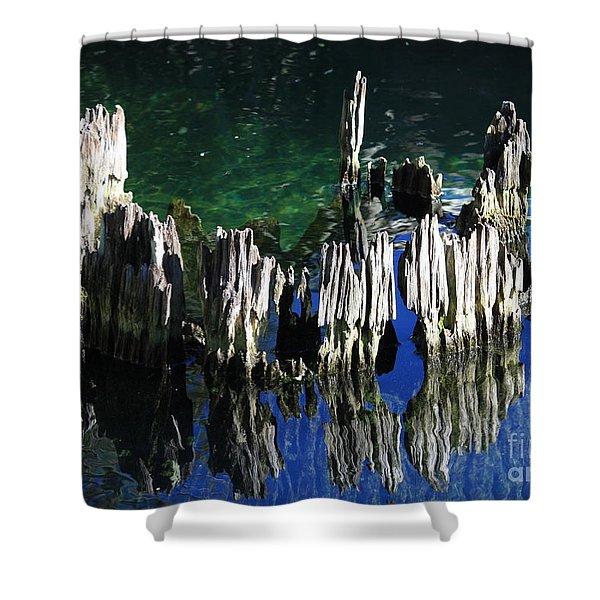 Bald Cypress Stump Shower Curtain