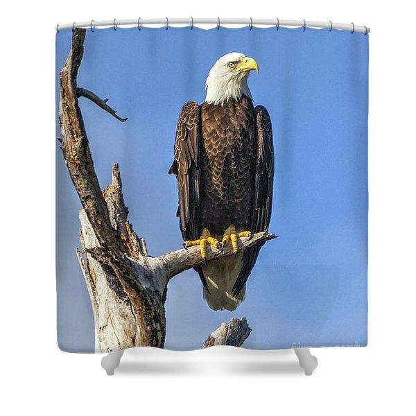 Bald Eagle 6366 Shower Curtain
