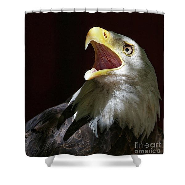 Bald Eagle - Call Of The Wild 2 Shower Curtain
