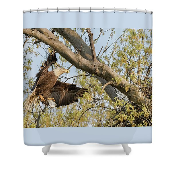 Bald Eagle Catch Of The Day  Shower Curtain