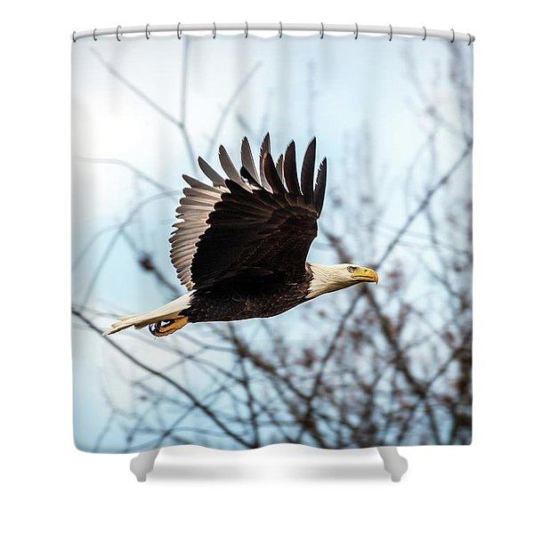 Bald Eagle Flight Shower Curtain