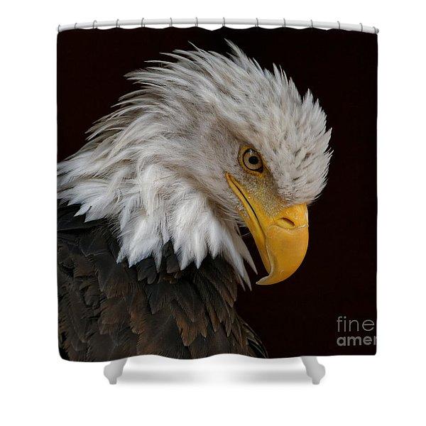 Bald Eagle - Head Bowed Shower Curtain
