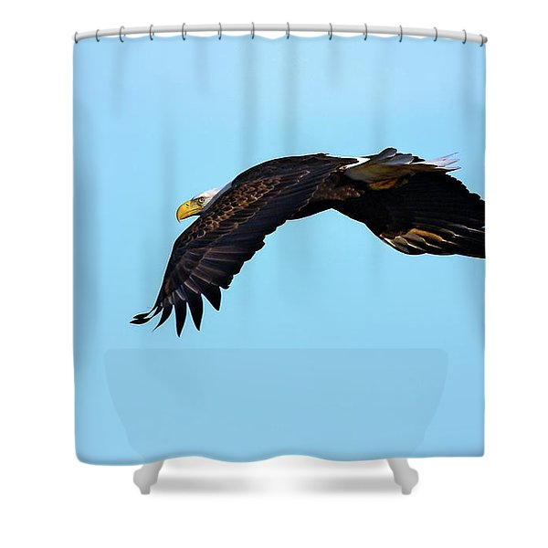 Bald Eagle Horizons Shower Curtain