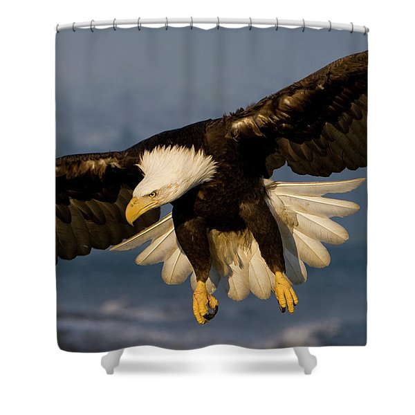 Bald Eagle In Action Shower Curtain
