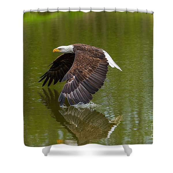 Bald Eagle In Low Flight Over A Lake Shower Curtain