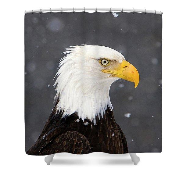 Bald Eagle Intensity Shower Curtain