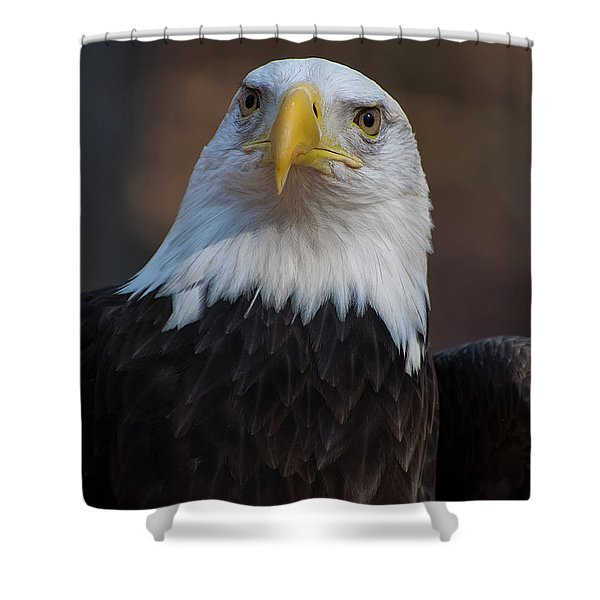 Bald Eagle Looking Right Shower Curtain