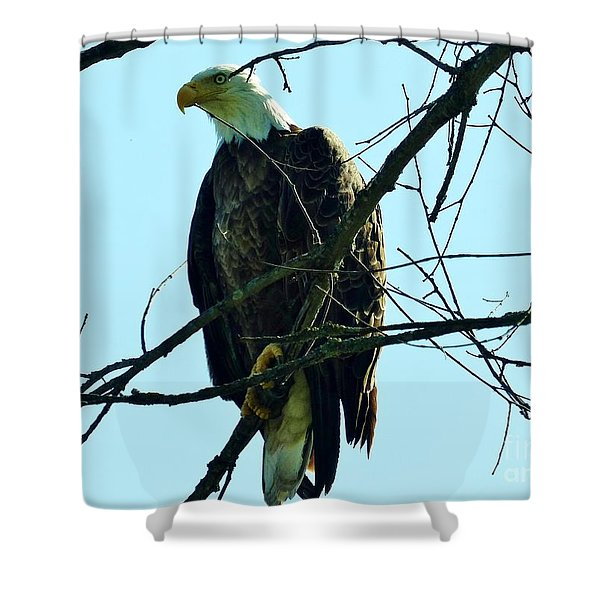 Bald Eagle Over The Root River Shower Curtain