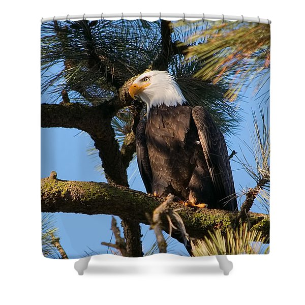 Bald Eagle Perch Shower Curtain
