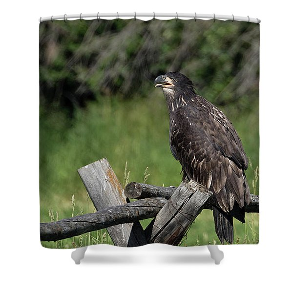 Shower Curtain featuring the photograph Bald Eagle by Ronnie and Frances Howard