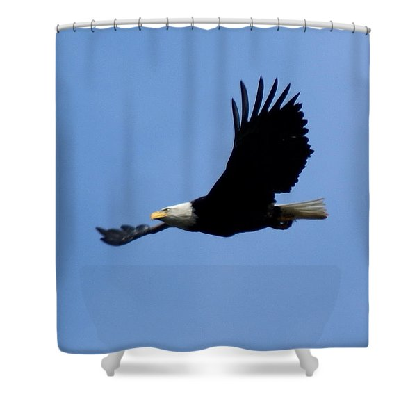 Bald Eagle Soaring High Shower Curtain