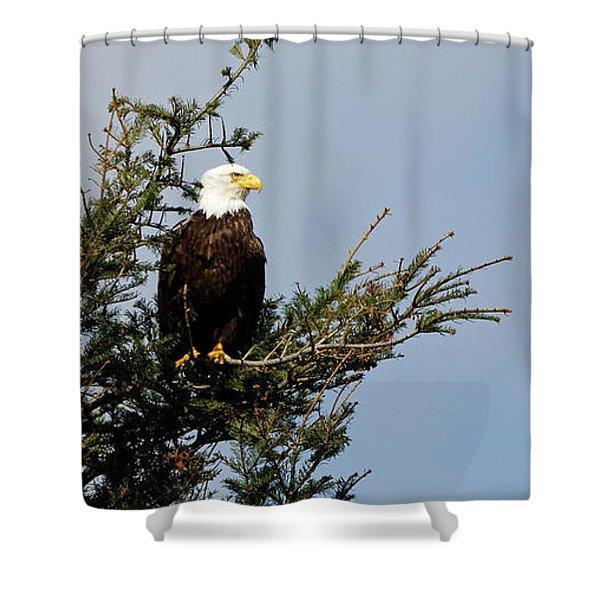 Bald Eagle - Taking A Break Shower Curtain