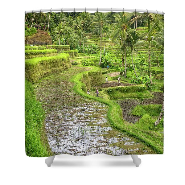 Bali - Rice Fields Terraces Shower Curtain