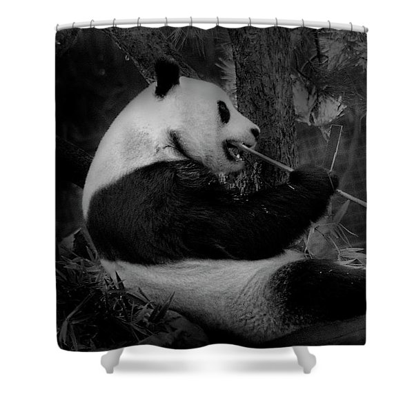 Bamboo, Bamboo, Bamboo Shower Curtain