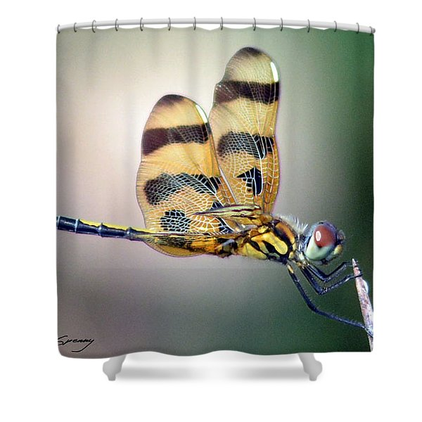 Banded Pennant Shower Curtain