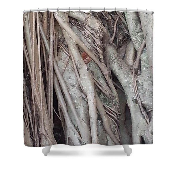 Banyan In Maui Shower Curtain