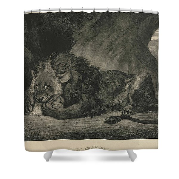 Barbary Lion Shower Curtain