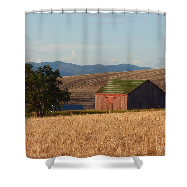Shower Curtain featuring the photograph Barn And Wheat by Charles Robinson