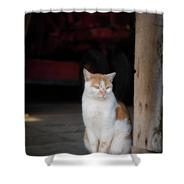 Barn Cat And Tractor Shower Curtain