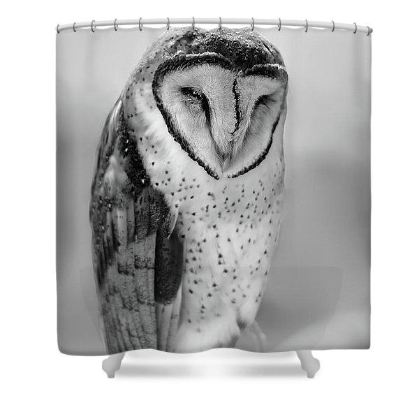 Barn Owl II Shower Curtain