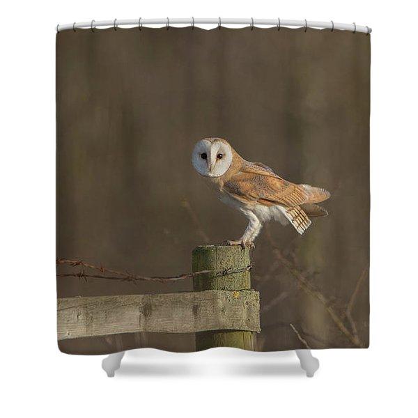 Barn Owl On Fence Shower Curtain