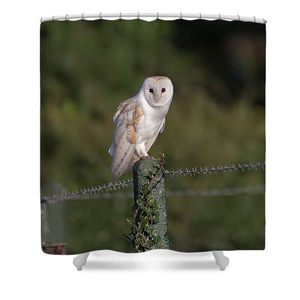 Barn Owl On Ivy Post Shower Curtain
