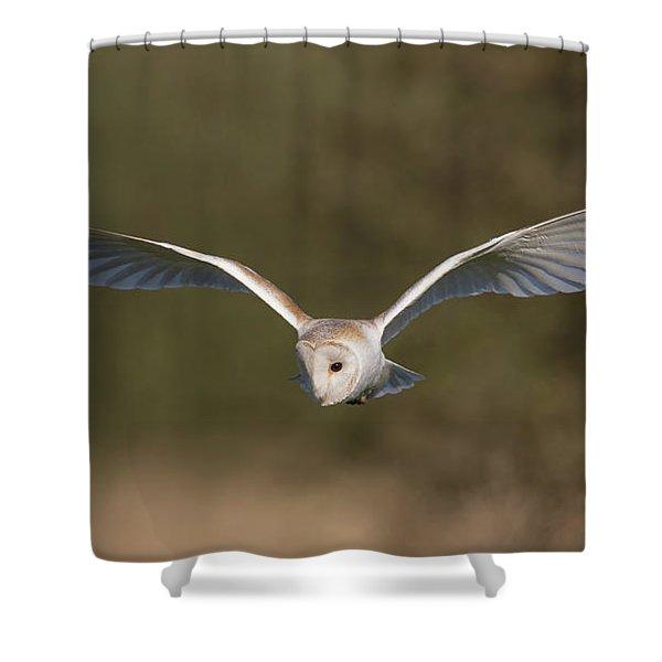 Barn Owl Quartering Shower Curtain
