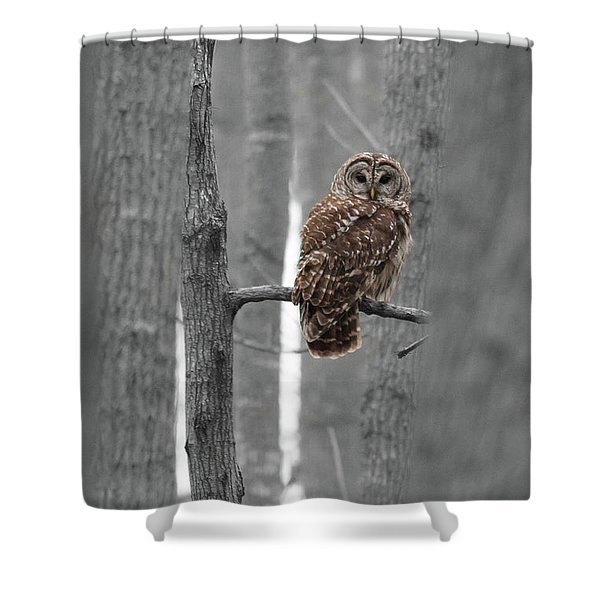 Barred Owl In Winter Woods #1 Shower Curtain