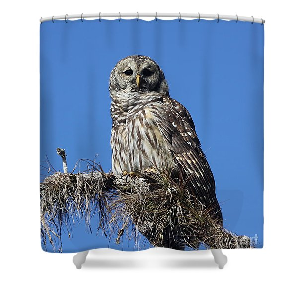Barred Owl Portrait Shower Curtain