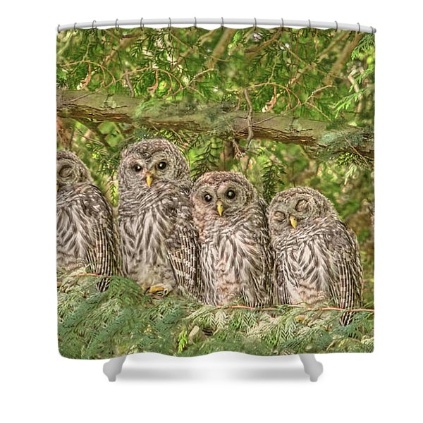 Barred Owlets Nursery Shower Curtain