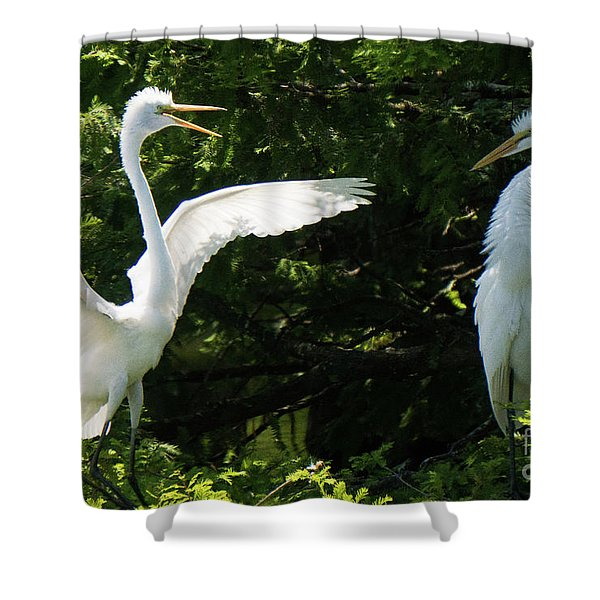 Battle Of The Egrets Shower Curtain