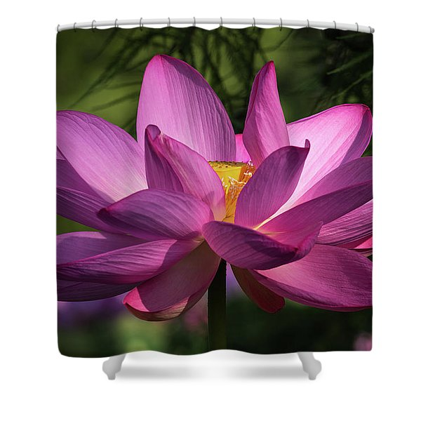 Be Like The Lotus Shower Curtain