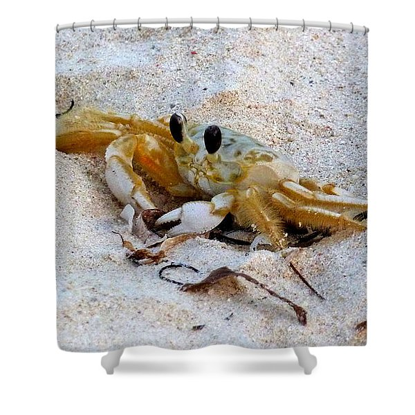 Beach Crab Shower Curtain