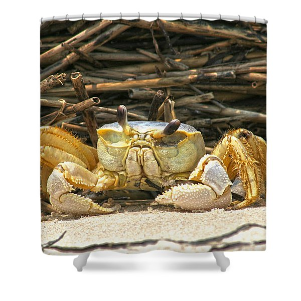 Beach Crab Shower Curtain