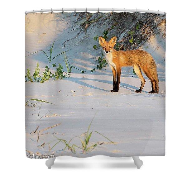 Beach Fox #3 Shower Curtain