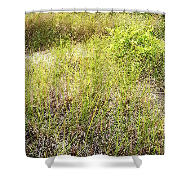 Beach Grasses Number 8 Shower Curtain
