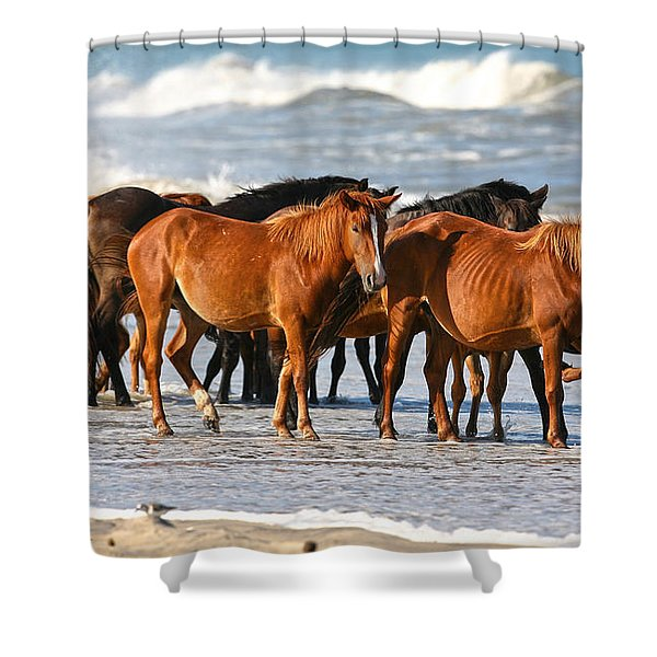 Beach Ponies Shower Curtain
