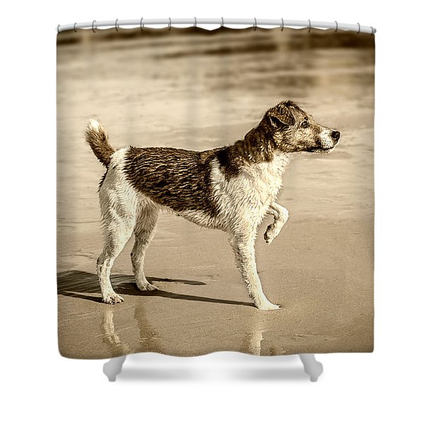 Shower Curtain featuring the photograph Beach Ready by Nick Bywater