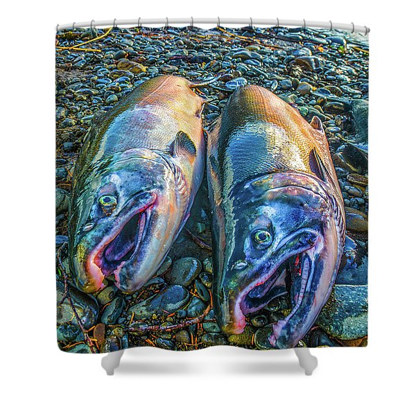 Beached Coho Shower Curtain