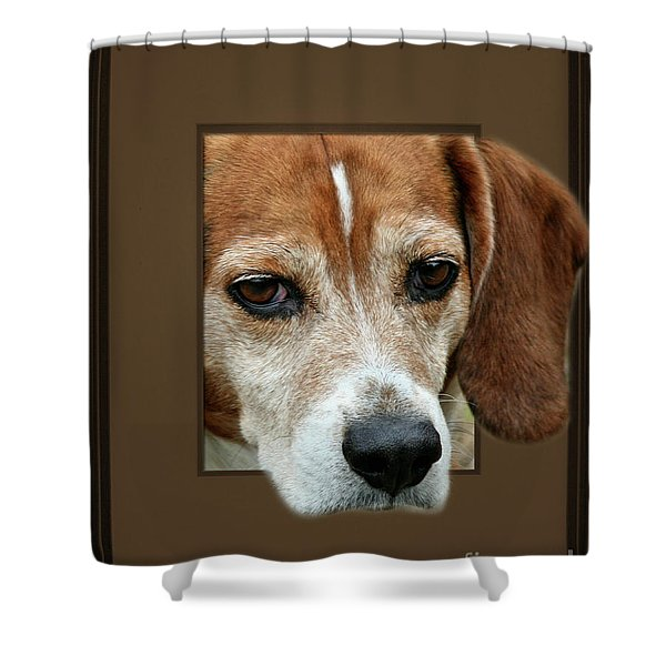 Beagle Peeking Out Shower Curtain