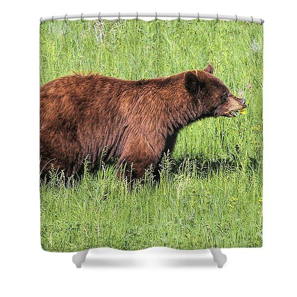 Bear Eating Daisies Shower Curtain