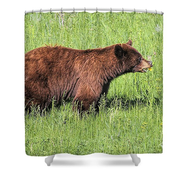 Shower Curtain featuring the photograph Bear Eating Daisies by Jemmy Archer