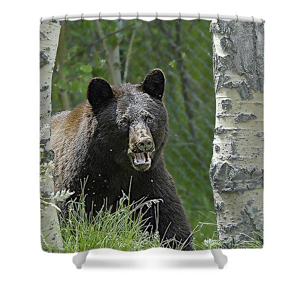 Bear In Yard Shower Curtain