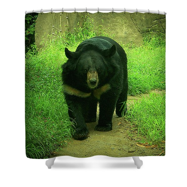 Bear On The Prowl Shower Curtain